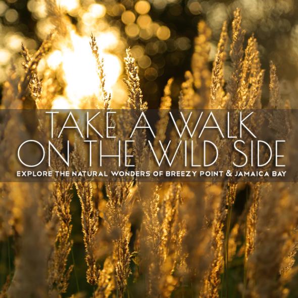 wild-side-WP-2015